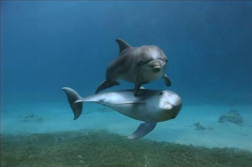 Дельфины всегда улыбаются (17 фото)