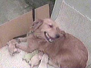 Необычный щенок (2 фото)