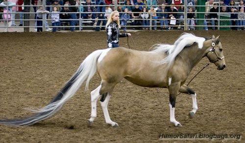 Самый длинный лошадиный хвост (4 фото)