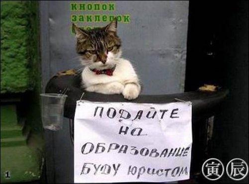 Забавные кошки (29 фото)