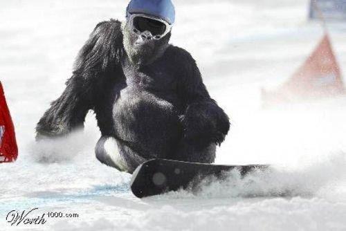 Животные и спорт (24 фото)