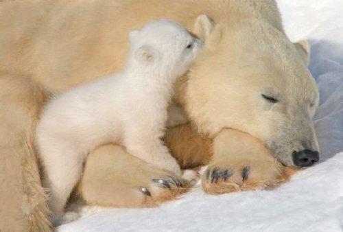 Подборка фото дикой природы (20 фото)