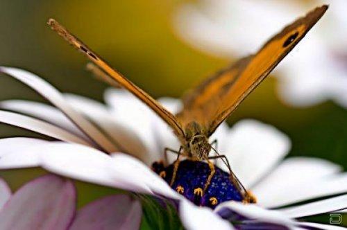 Бабочки (21 фото)