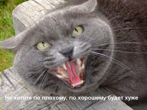 Смешные фото животных с надписями (22 фото)