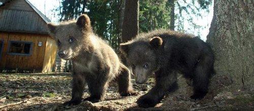 Детский дом для медвежат (13 фото)