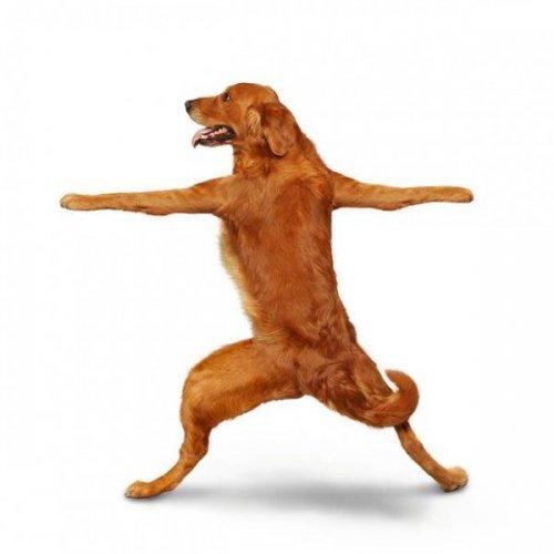 Собачий йога-календарь (28 фото)