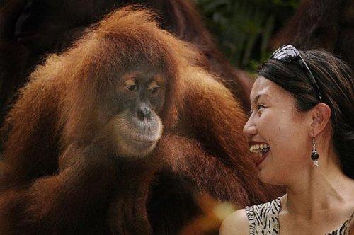 Смешные обезьяны (20 фото)