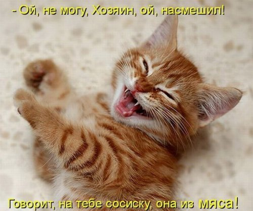 Ох уж эти кошки ( 21 фото)