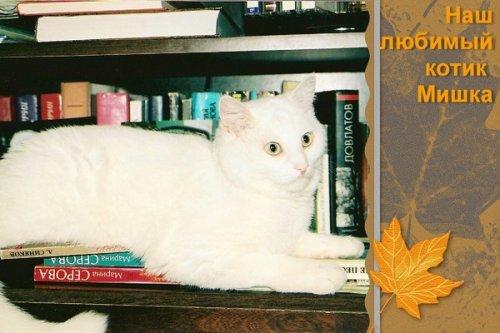 Любимый котик (17 фото)