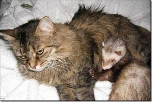 Любовь в животном мире (22 фото)
