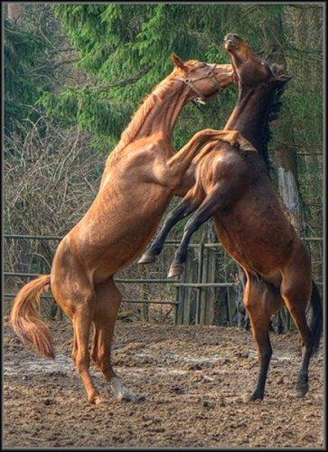 Кони в движении (20 фото)