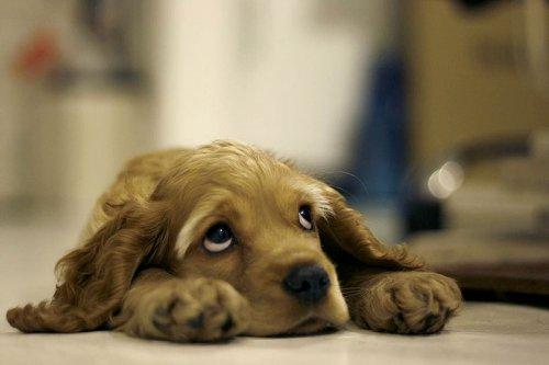Милые собачатки (28 фото)