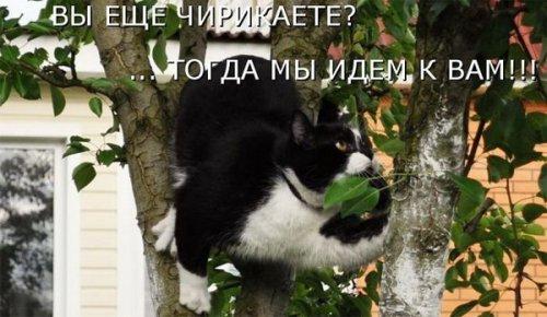 Весёлая котоматрица (17 фото)