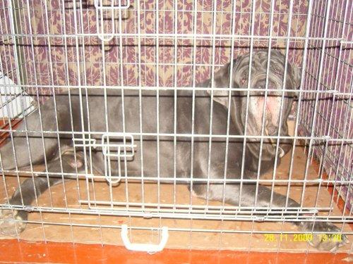 Фотографии с выставки собак (39 фото)