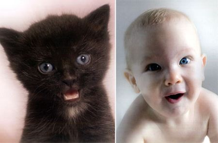 Младенцы,похожие на котят (8 фото)