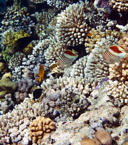 Морская экзотика (26 фото)