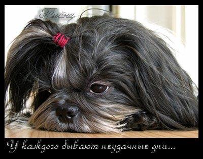 Не грусти! (28 фото)