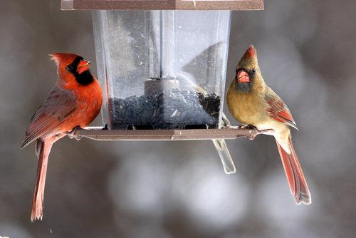 Любители птиц – преграда на пути естественной эволюции