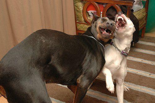Животные смеются (24 фото)
