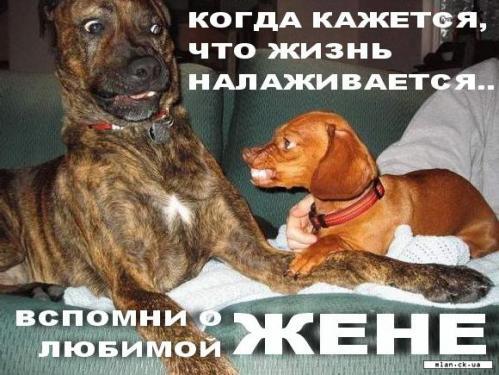 Забавные картинки животных  (23 фото)