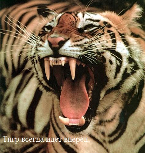 2010 год - год Тигра (8 фото)