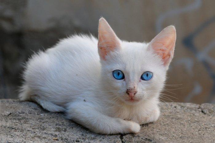 распечатать фотографии котят много лет