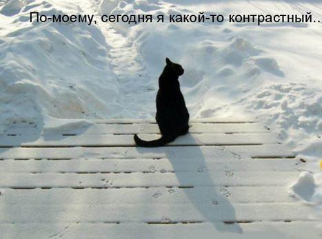 Прикольные животные (16 фото)