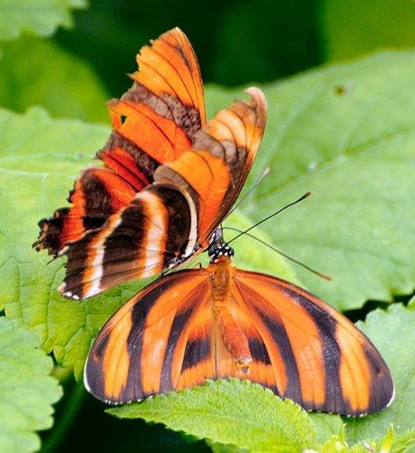 Красавицы - бабочки (46 фото)