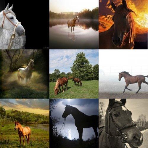 Изящные лошадки (25 фото)