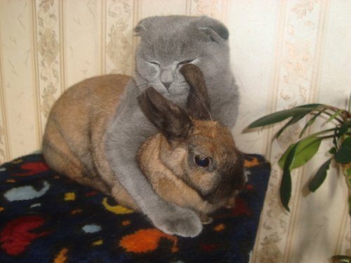 Дружба животных (18 фото)