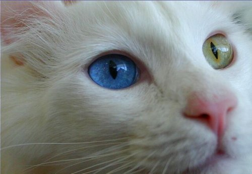 Кошачьи глаза (10 фото)