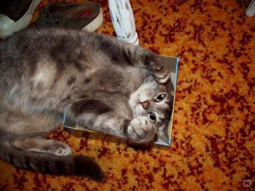 Кошки вездеcущие (21 фото)