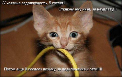 Весёлая котоматрица (30 фото)