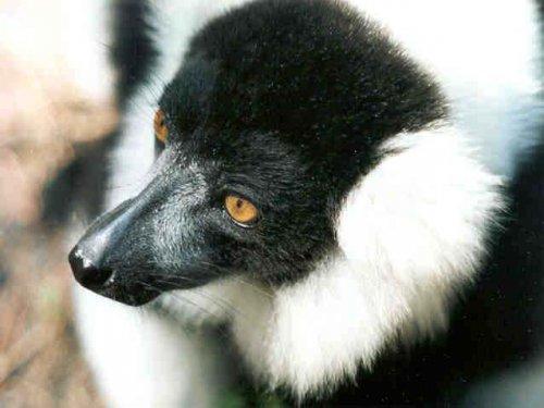 Животный мир Мадагаскара (65 фото)