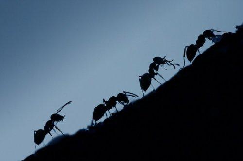 Муравьи - трудяги (31 фото)