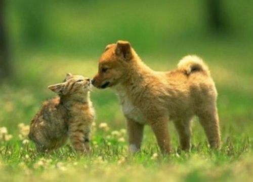Ученые доказали превосходство собак над кошками