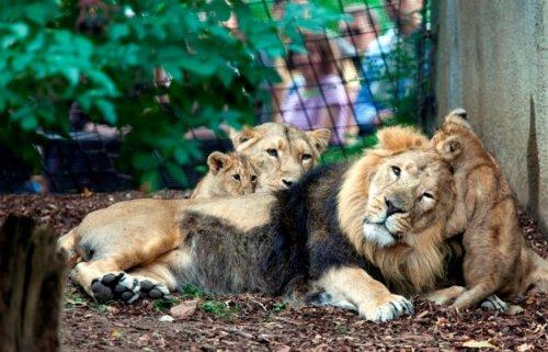 Фотоподборка о жизни животных (20 фото)