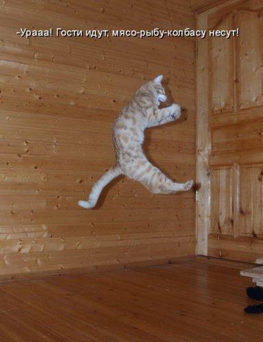 И снова любимые коты (20 фото)