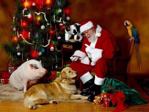 Зверята - помощники Санта-Клауса (36 фото)