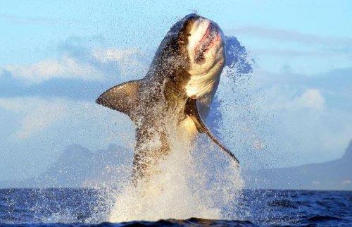 Лучшие фото зверюшек за неделю (31 фото)