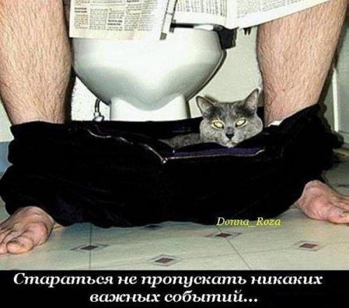 Каждый кот должен... (22 фото)