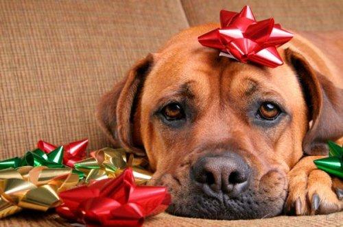 Собачки в новогодних аксессуарах (15 фото)