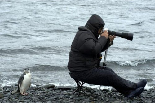 Эти забавные животные (30 фото)
