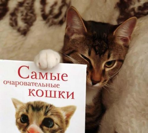Очаровательные кошки (26 фото)
