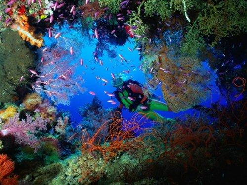 Жизнь под водой ( 64 фото)
