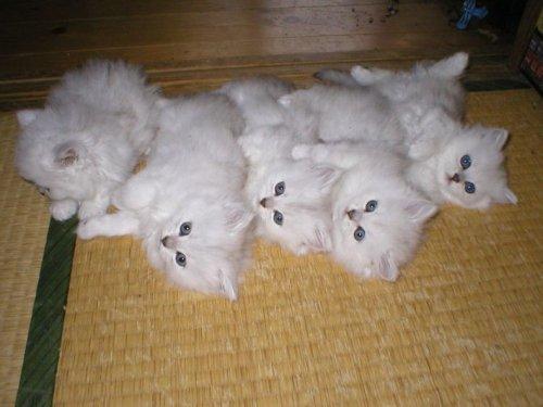 Позитивный букет котов (11 фото)