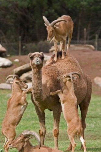 Эти забавные животные (26 фото)