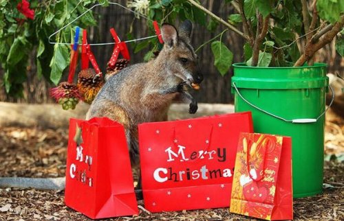 Рождество в зоопарках (20 фото)