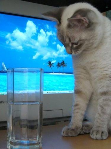 Кошачья фотосессия (30 фото)