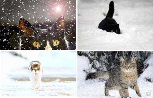 СнегоКоты (18 фото)